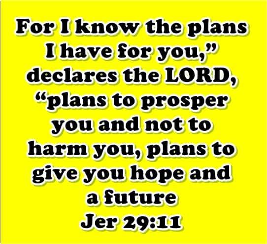 bible niv free download